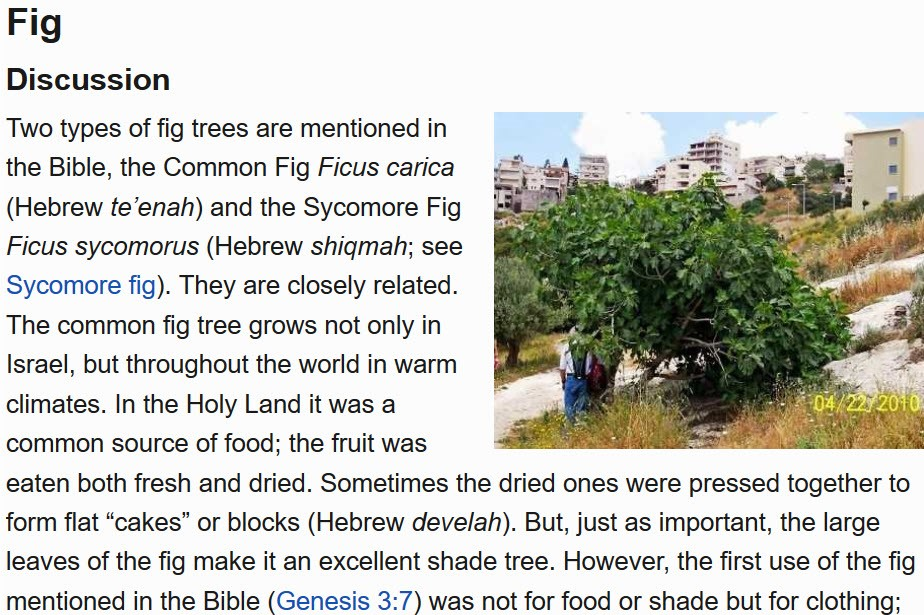 Fig article